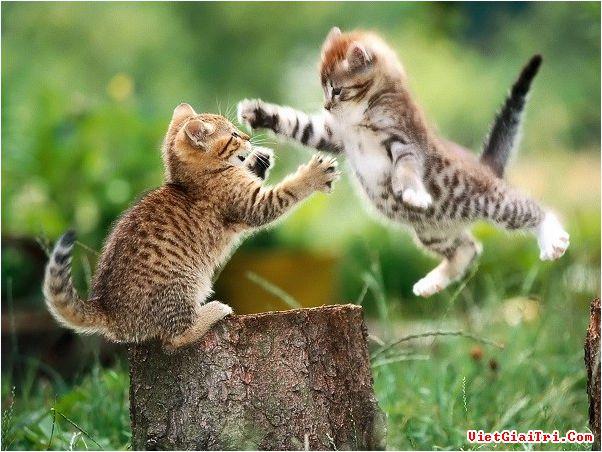 Bài 13: Thành ngữ liên quan tới con vật
